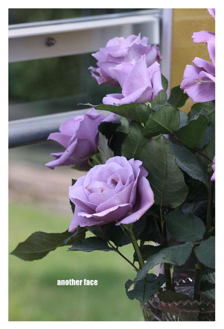 0515-Blue rose2