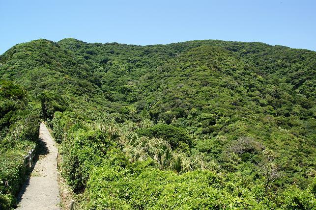 亜熱帯植物の木々が生い茂る