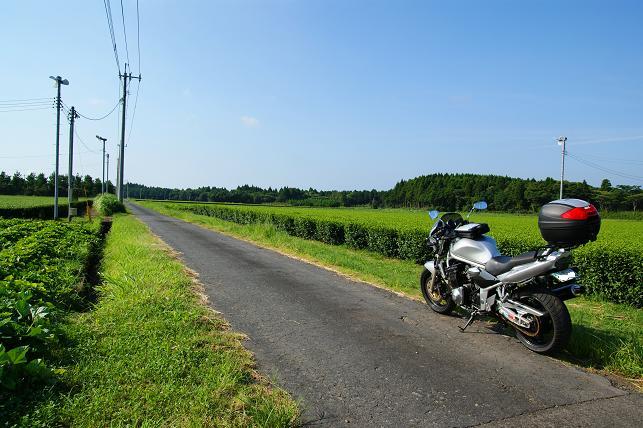 茶畑の農道にて
