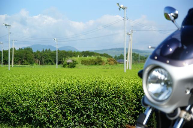 茶畑とBandit