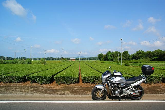 茶畑に沿って