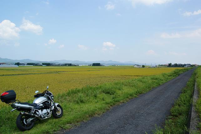 金色の稲穂の田園が広がる