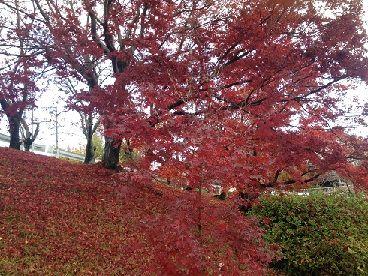 上の道路の紅葉と赤の絨毯