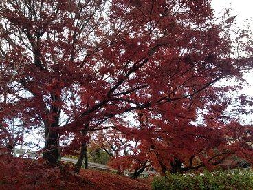 上の道路の紅葉