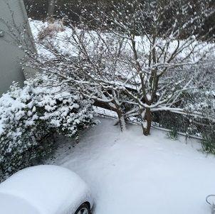 2014年初雪