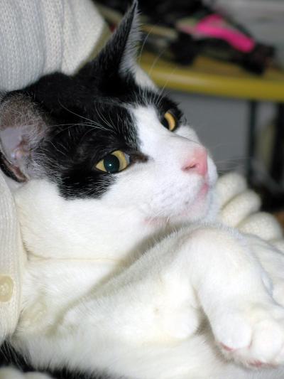 白黒猫のこうちゃんです