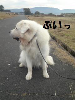 001_convert_20121025131326.jpg