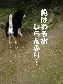 001_convert_20121130142845.jpg