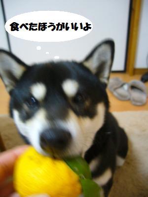 003_convert_20111222204508.jpg