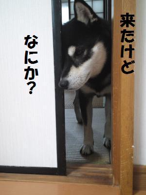 006_convert_20120927225101.jpg