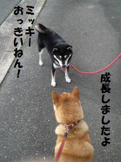 006_convert_20121013144944.jpg