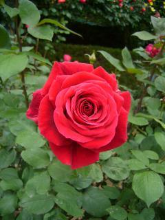 007_convert_20120520145948.jpg