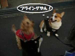 008_convert_20111216121815.jpg