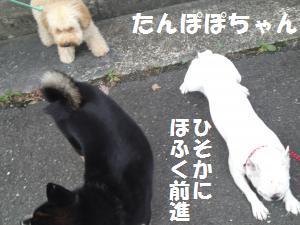 008_convert_20120923090648.jpg