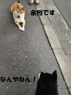 008_convert_20121013144844.jpg
