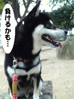 009_convert_20121013145323.jpg