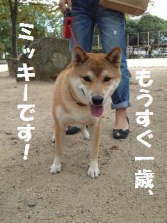 011_convert_20121013145115.jpg