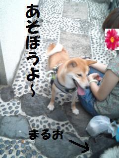 014_convert_20120727130803.jpg