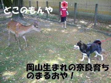 043_convert_20120527205242.jpg
