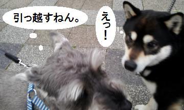 2012-03-16+173143_convert_20120320113907.jpg