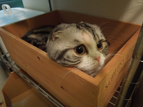 木箱のまる