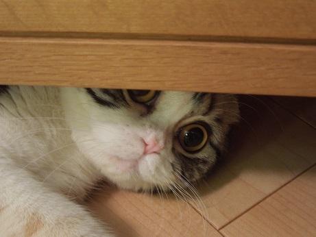 3まる食器棚の下