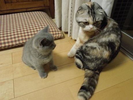 ふたりは何を話しているのかな