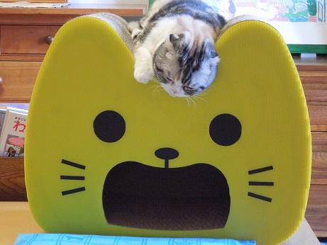 黄色いネコさんで寝ているまるちゃん