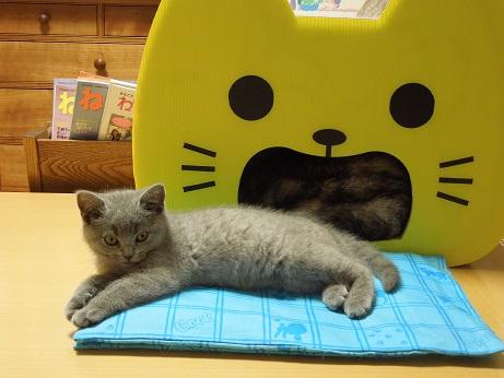 黄色いネコさんの前です