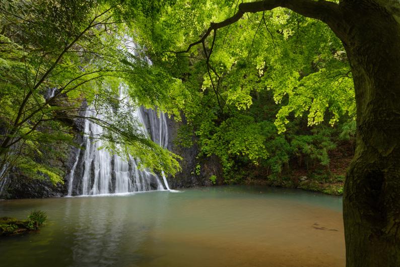 新緑清滝2
