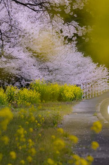 桜江町道路沿い
