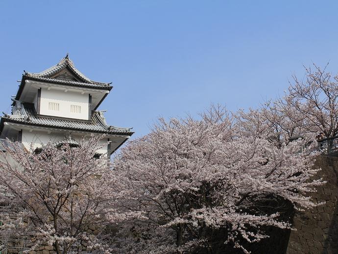 金沢城石川門と満開の桜