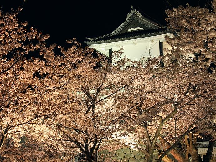 金沢城石川門の夜桜