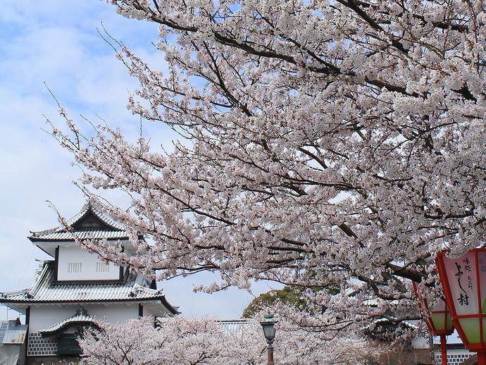 金沢城 満開の桜と石川門