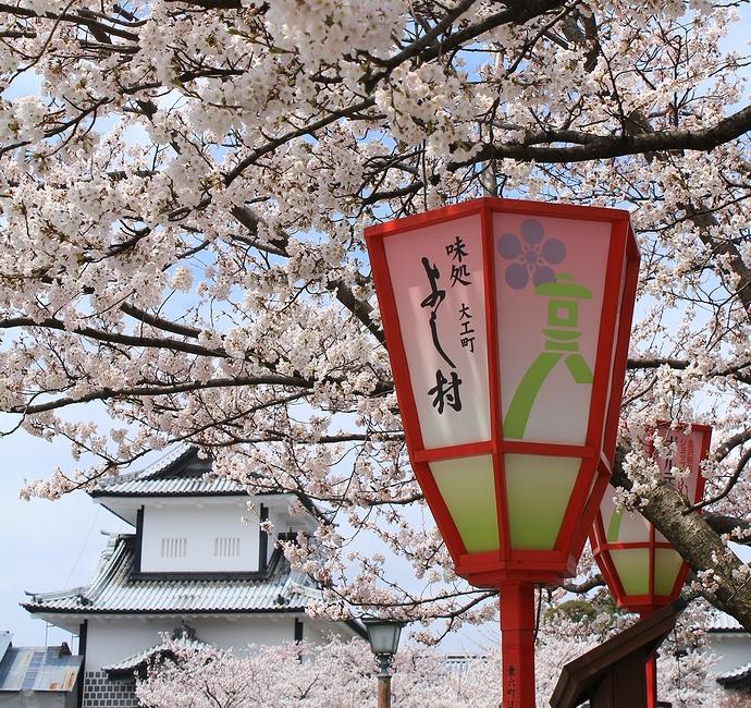 金沢城の桜とぼんぼり