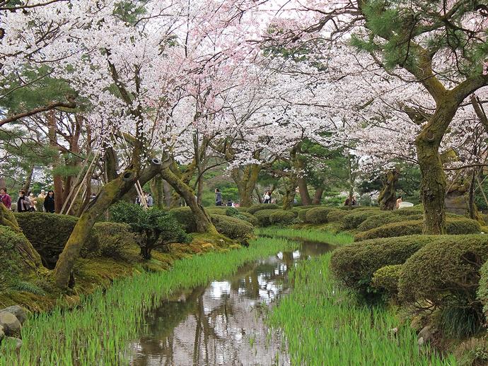 兼六園 曲水と桜