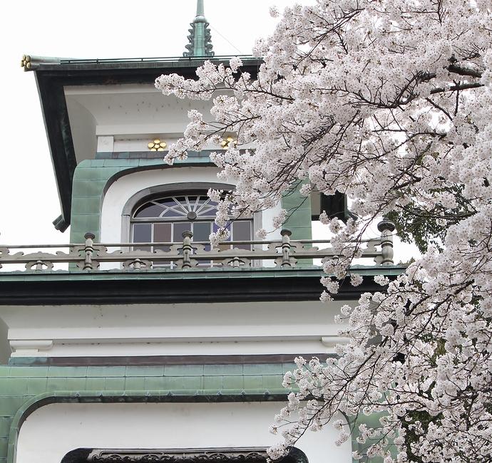 尾山神社 神門と桜
