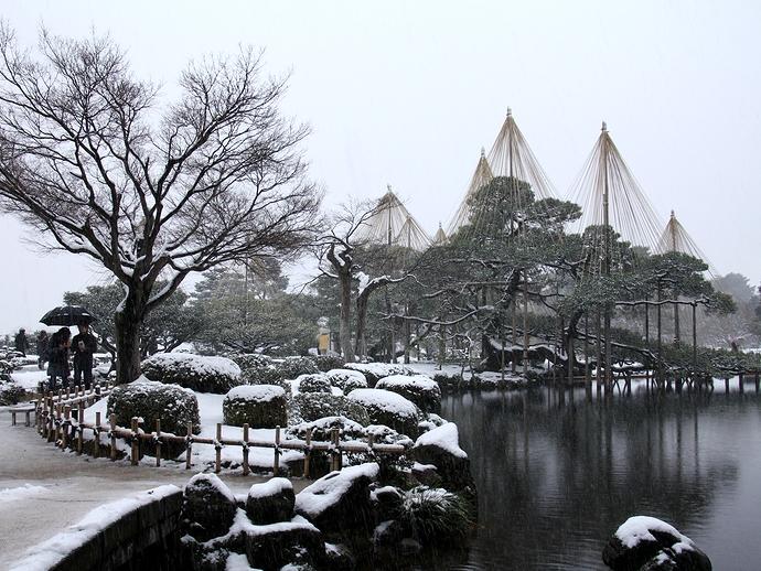 唐崎松の雪吊り