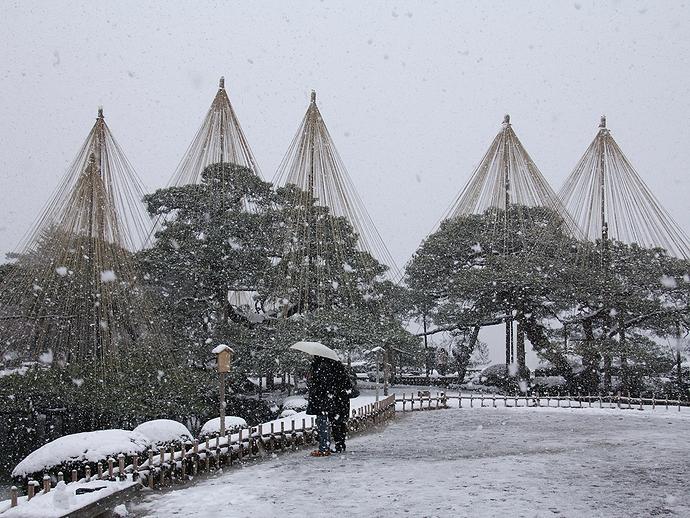 雪の舞う兼六園 雪吊りとともに