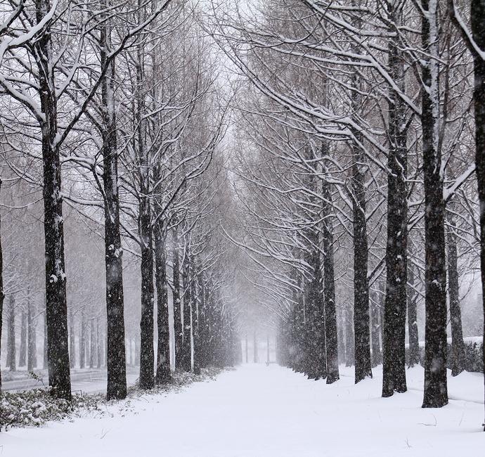 雪の太陽が丘メタセコイア並木