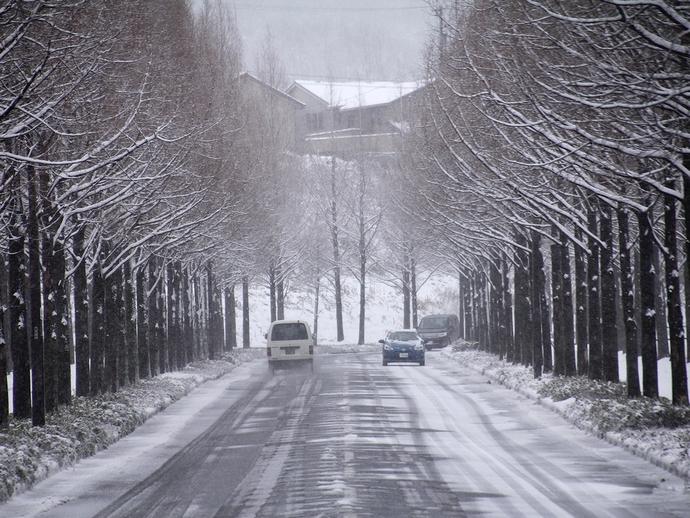 太陽が丘のメタセコイア並木 車道も雪化粧