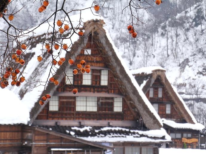 冬の菅沼 柿の木と