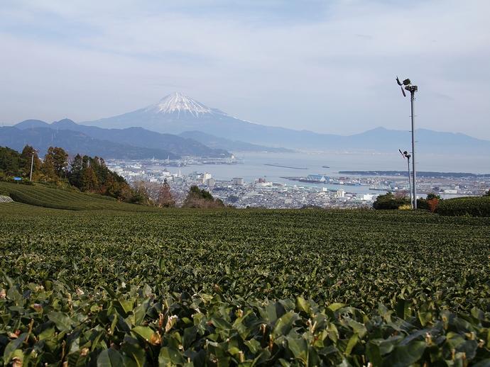 冬の茶畑と富士山 静岡市日本平より