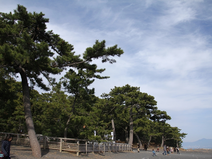 三保の松原の様子