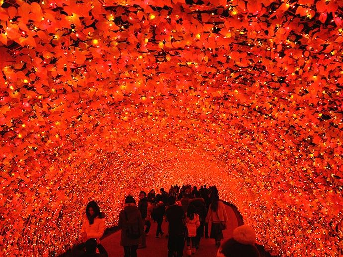 光のトンネル「もみじ」 なばなの里にて
