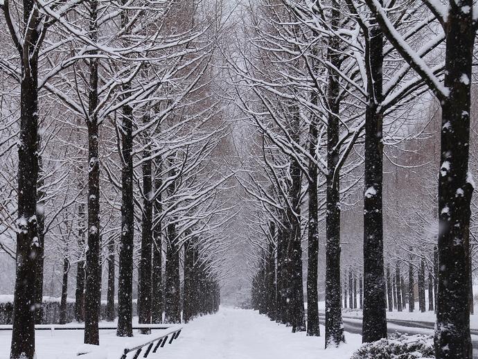 金沢太陽が丘 冬のメタセコイア並木