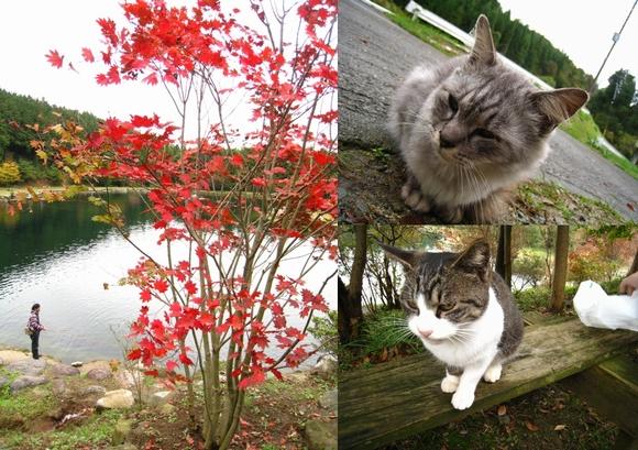 2010.10.31赤城 (5)