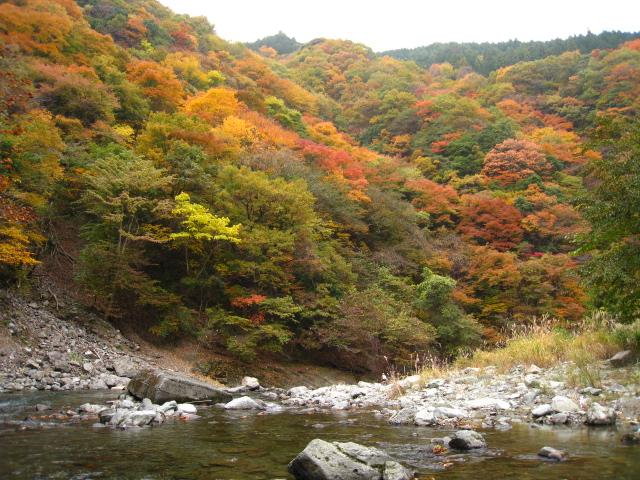 2010.11.14うらたん (46)