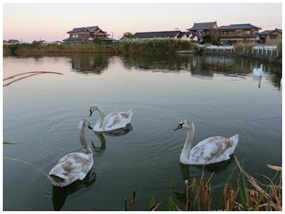 261019田村池風景4
