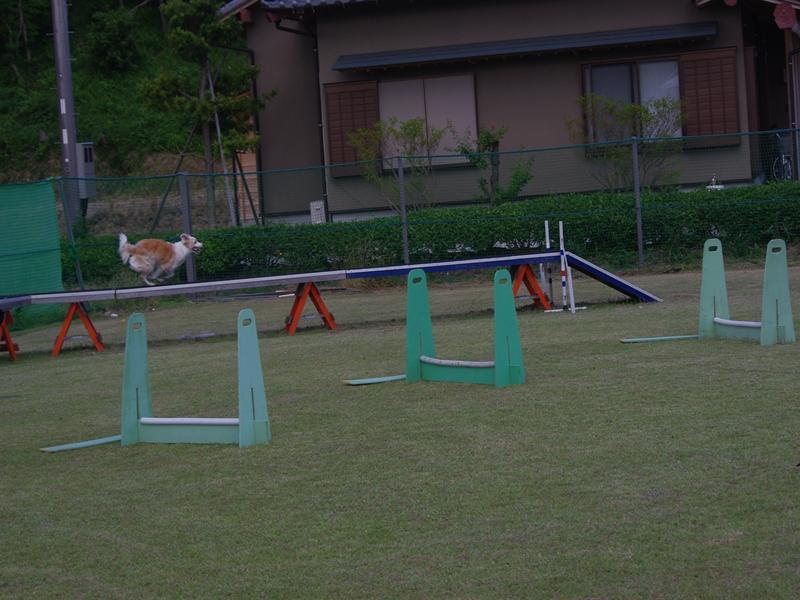 IMGP5450_R.jpg